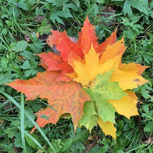 осень на зелени. superameba